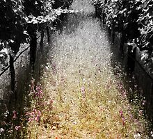 Path To Pinot by Adrena87