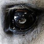 Eye of the blind  by Abigail Jennings