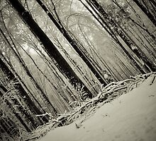 Tree trunks by lalylaura