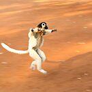 Dancing Verreaux's Sifaka by Gina Ruttle  (Whalegeek)