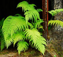 fern and rust by Mark Malinowski