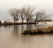 Murray Mouth, Yunderup by AbbottPhotoArts