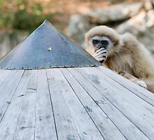 Monkey Business by Chris Tarling