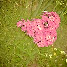 Heart-shaped flower by lalylaura