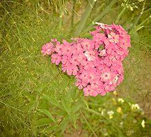 Heart-shaped flower by lalylaura