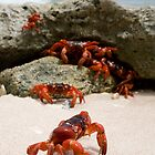 Red Crabs by Houndstooth