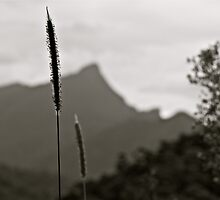 wollumbin by michelle mcclintock