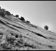 albanian landscape by Albert  Baja