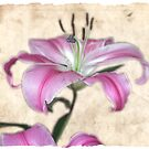 Lilly #1 by SylviaHardy