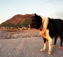 By the Beach with Indy by Michael Haslam