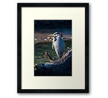 Great Blue Heron Chillin' Framed Print