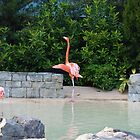 Flamingo-Sea World Orlando by lissie27