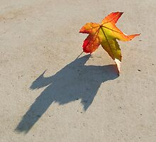 Shadow of a leaf by Pixie Copley LRPS