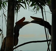 Toucan Love-Denver Zoo, CO by lissie27