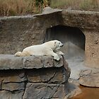 Sunbathing-Denver Zoo, CO by lissie27