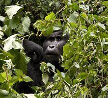 gorillas in the bush by gruntpig