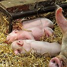 Millie's Pigglets by Simon Duckworth