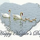 Mothers Day Card Mute Swan Family by MotherNature