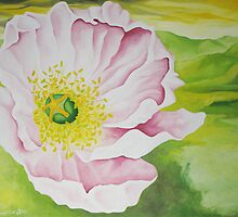 Pink California Poppy by Kim Bender