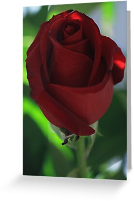 ~ Ruby Rose ~ by Bree Lucas