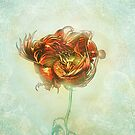 Rose by James Fosdike