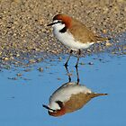Red Capped Plover - Cervantes WA by Alwyn Simple