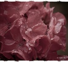 The Petals Whisper by AdornmentPhotog