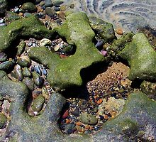 Tide Pool Mosaic - Cardiff State Beach, San Diego County, CA by Rebel Kreklow
