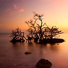 Florida Keys Sunset by DawsonImages