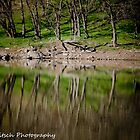 Reflections 2 by Kat36