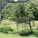 Peace in Tallebudgera Valley by aussiebushstick