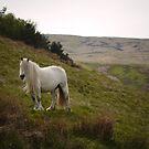Drybarrows White Heather by Fleur Hallam