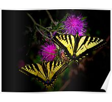 Stick Together ~Swallowtail Butterflies ~ Poster