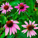 Coneflowers and Bumblebees by Julie Everhart