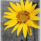 I Got Sunshine...On A Cloudy Day by Betty Northcutt