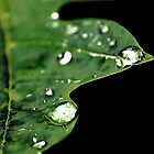 Drops of rain by Thauchengcha