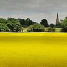 Glorious yellow fields of rape seed, South Downs, UK by Sharon Bishop