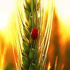 The Ladybug by Thauchengcha