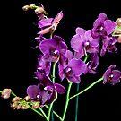 Orchid Flowers by DonDavisUK