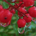 raindrops and berries by ANNABEL   S. ALENTON