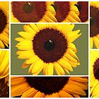 sunflower in my mind by lensbaby