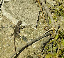 wetlands aligator lizard by Lenny La Rue, IPA