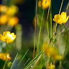 Buttercup Yellow by alienfunk