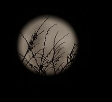 Twiggy Moon. by shortshooter-Al