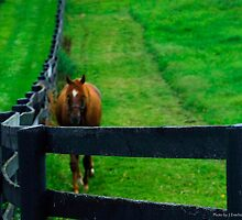 Here He Comes by Julie Everhart