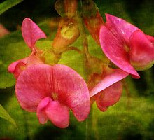 Sweet Pea by vigor