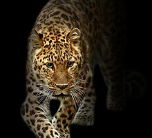 Emerging from the Shadows of Extinction! by Mark Hughes