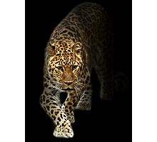 Emerging from the Shadows of Extinction! Photographic Print