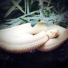 sneaky snake by Loretta Marvin