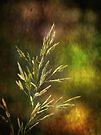 Grass by Lucinda Walter